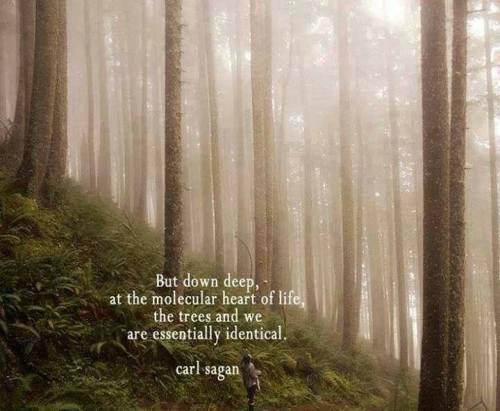 Carl Sagan_Trees